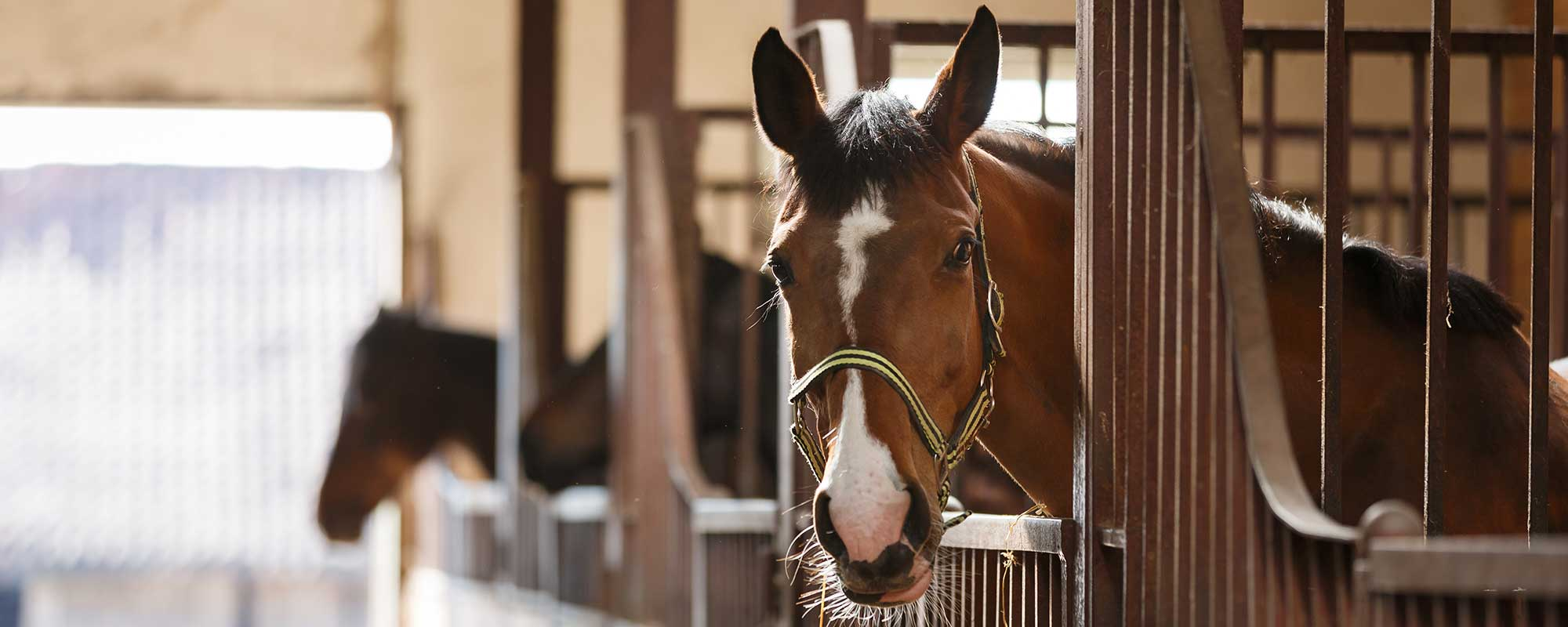 Equine insurance quotes
