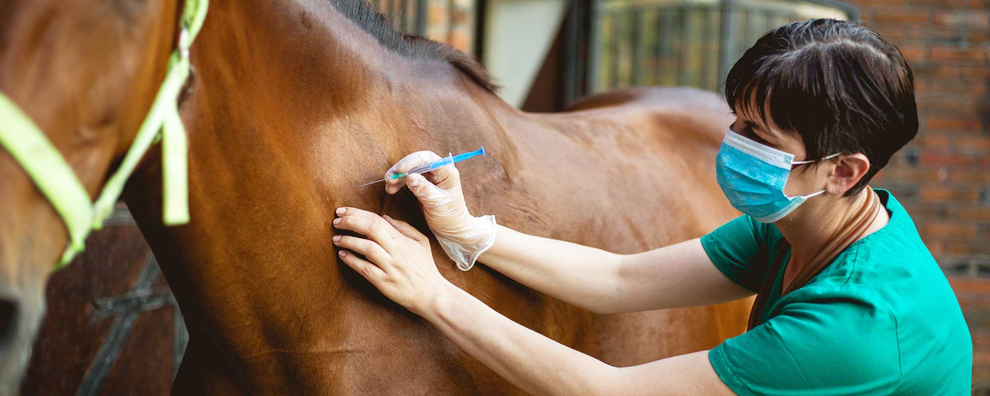 Vet givng injection to horse