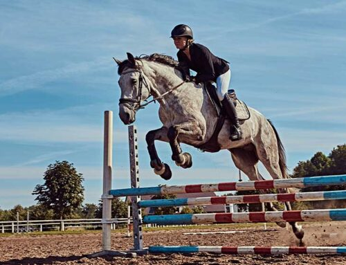 Equine Liability Insurance Release Agreement