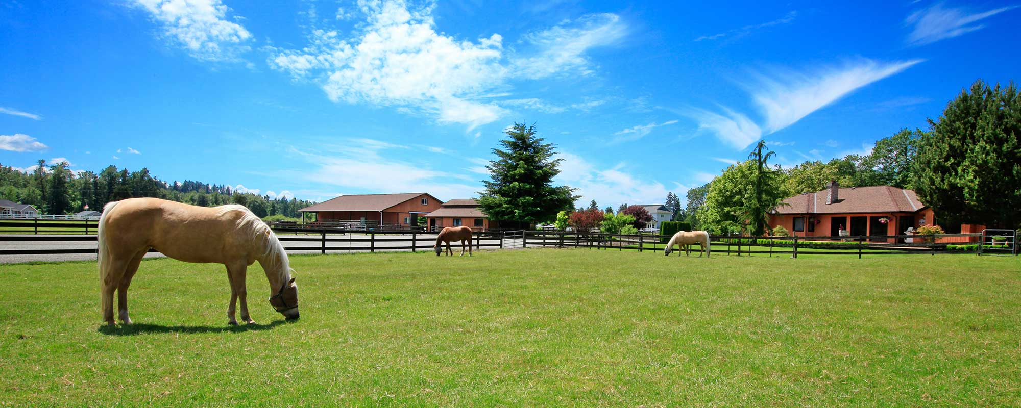 Horses grazing at horse farm