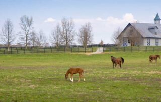 Foals and Mares on a Horse Farm