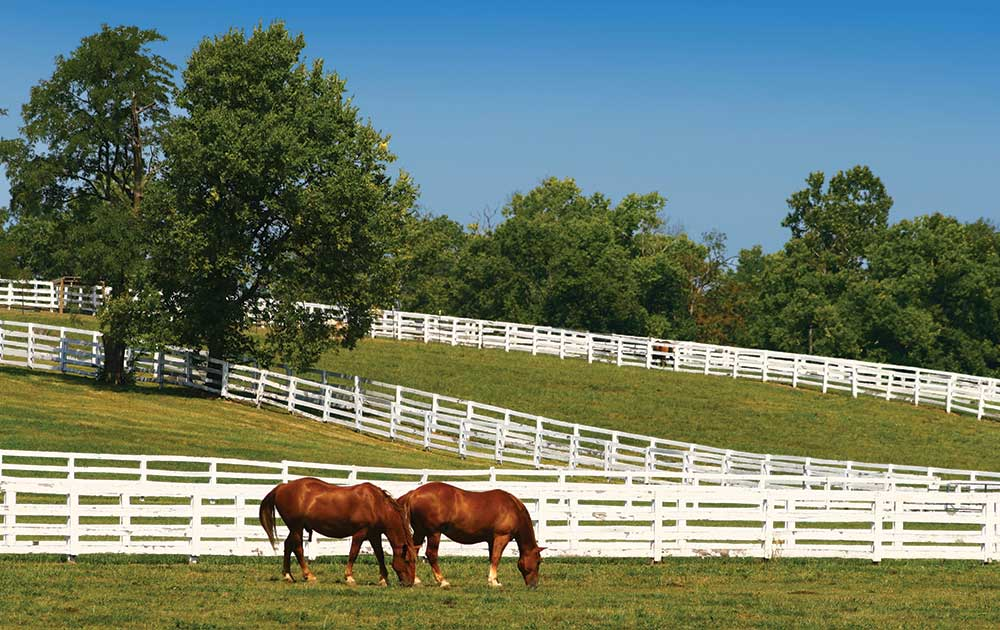 Private Horse Owner's Equine Liability Insurance