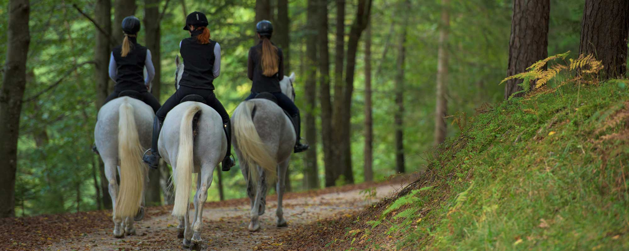 Three women riding horses on path in woods