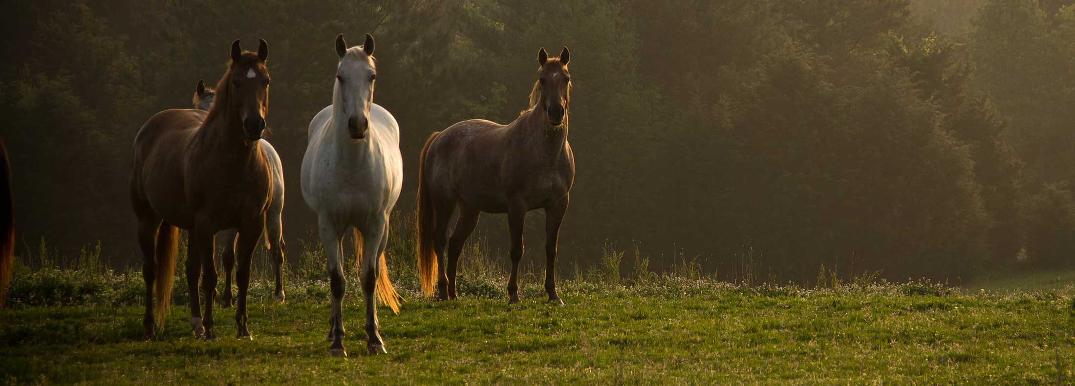 Three horses in atmospheric field
